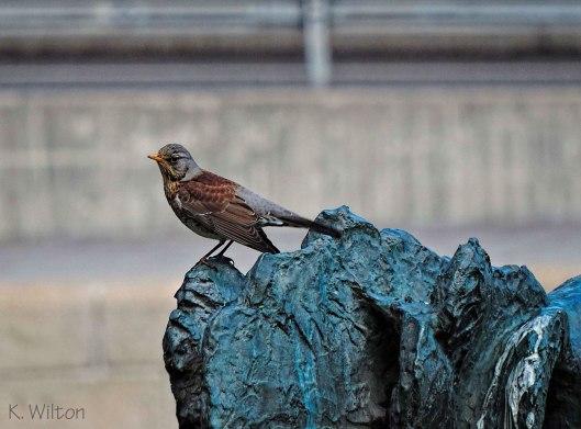 fågel-blå-DSCN2040_redigerad-1